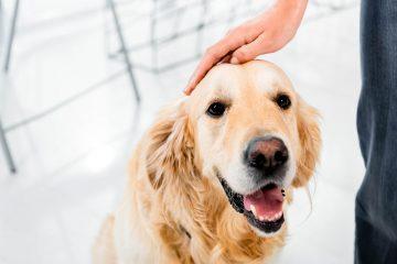 Топ-5 семейных пород собак для квартиры
