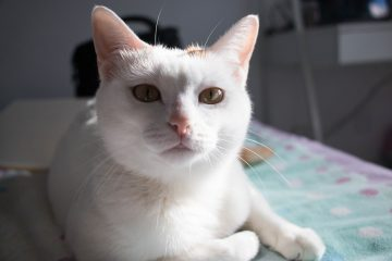 Предупреждает о скорых событиях: Почему коты мешают хозяевам спать