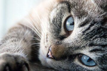 ТОП-5 причин по которым мы любим кошек