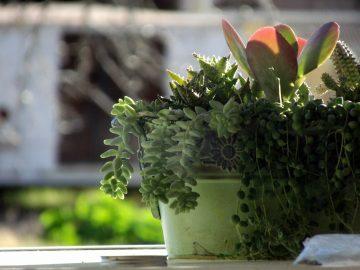 7 очень простых способов помочь вашим комнатным растениям