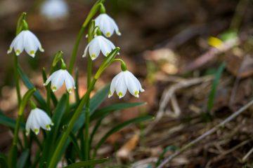 Гидрометцентр: Какая погода будет в марте в Башкирии