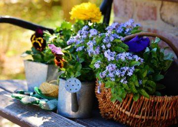 5 самых успешных садоводов среди знаков Зодиака