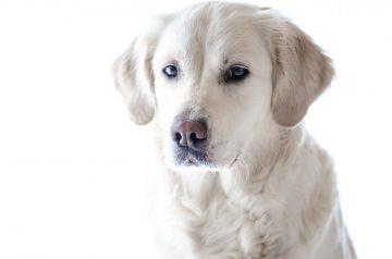 Названы самые беспроблемные в содержании породы собак