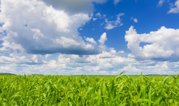 Гидрометцентр предупреждает о похолодании в первый день лета