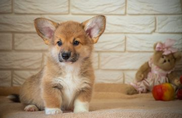 Лучшие породы собак для детей по мнению кинологов