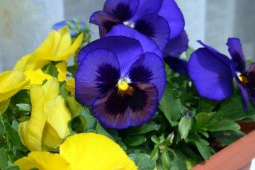 Названы растения, которые привлекут в дом богатство