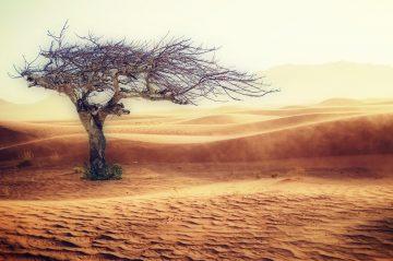 Метеорологи предупредили о глобальном изменении климата