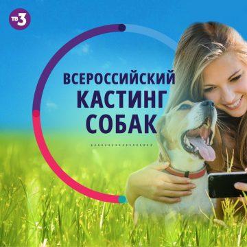 «Лучший пёс»: В Башкирии ищут участников для нового телешоу