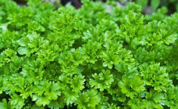 Вырастет уже осенью:  что можно посадить в августе в огороде