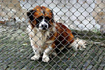 В Башкирии появятся приюты на 3 тысячи мест для бездомных животных