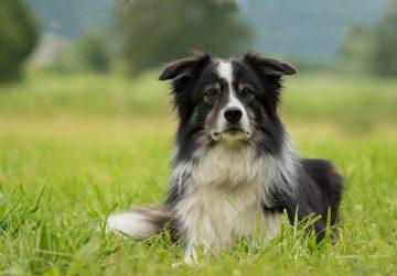 Пять самых неприхотливых пород собак