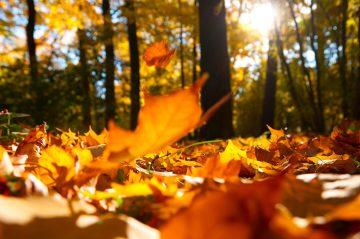 Каким знакам Зодиака будет тяжело этой осенью