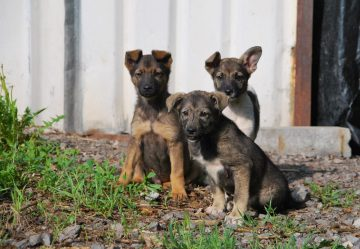 В Башкортостане появится семь приютов для бездомных животных
