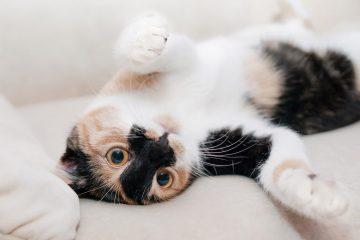 Японские ученые выяснили, что кошачья мята защищает кошек от комаров