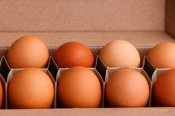 Употребление куриных яиц продлевает жизнь