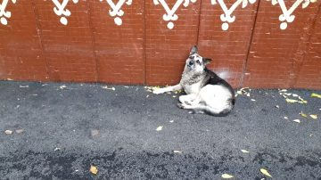 Уфимский «хатико» два года ждет хозяина и не отходит от дома