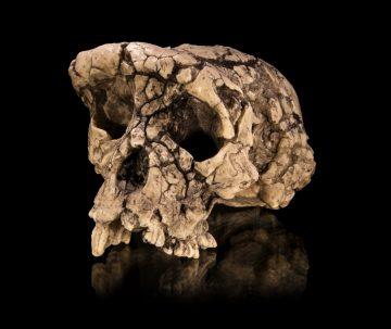 Идентифицировано человекоподобное существо возрастом 7 миллионов лет
