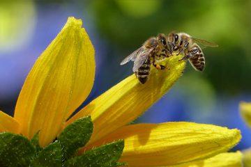 Химобработка лесов в Башкирии вызвала массовую гибель пчел