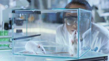 Биологам смогли омолодить стволовые клетки мышей в костном мозге