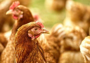 Первый в мире случай заражения человека птичьим гриппом H5N8 подтвержден в РФ