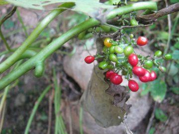 Ученые из Индии нашли новое растение против коронавируса COVID-19