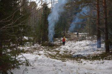 Натуртропе кгоре Ялангас вБашкирии начали вырубку леса