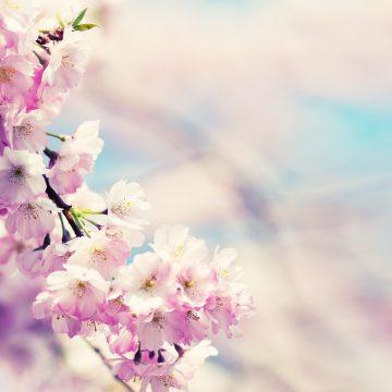 Народные приметы на 29 апреля: как встретишь Чистый четверг, так весь год проведешь