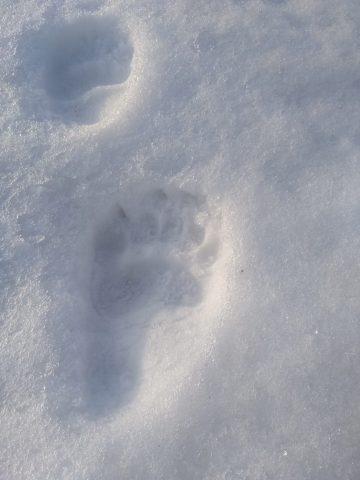 Из-за аномальной жары в Башкирии раньше времени проснулись медведи